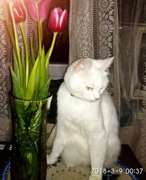 """фото: Прошу совета, как кормить кошек, что бы дешево и """"сердито""""."""