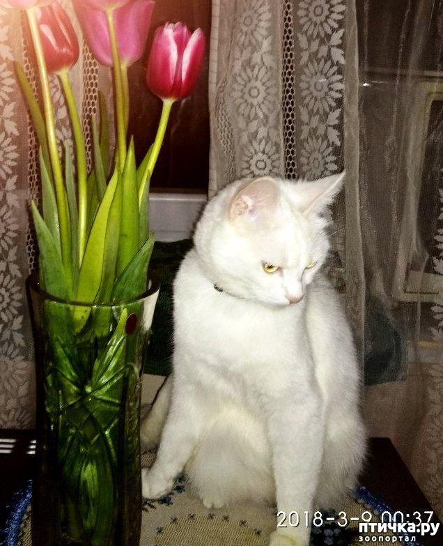 фото 1: Прошу совета, как кормить кошек, что бы дешево и