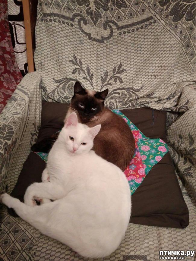 фото 7: Прошу совета, как кормить кошек, что бы дешево и