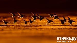 фото: Обворожительные фотографии с птичками