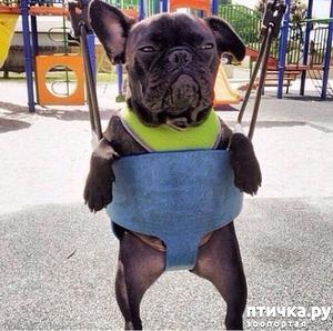 фото: Собачьи мысли по поводу и без