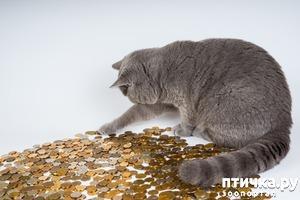 фото: Новые возможности портала Птичка. ру