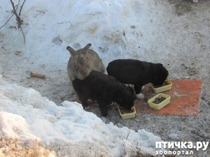 фото: Кролик, заменивший щенятам мать и отца)