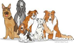фото: Малоизвестные и очень интересные факты о собаках