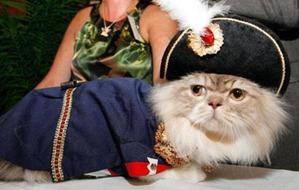 фото: Миниатюрные кошки породы Наполеон