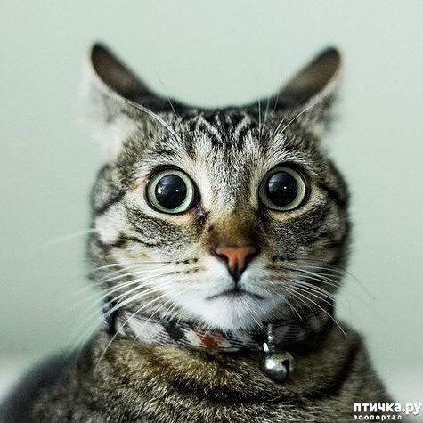 фото 1: Когда сказал коту, что это он у тебя живёт, а не ты у него