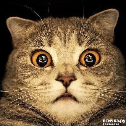 фото 2: Когда сказал коту, что это он у тебя живёт, а не ты у него