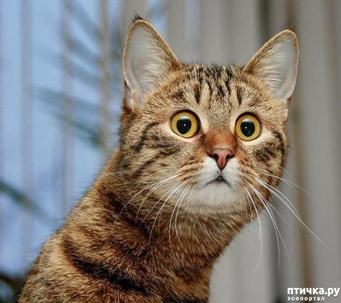 фото 3: Когда сказал коту, что это он у тебя живёт, а не ты у него