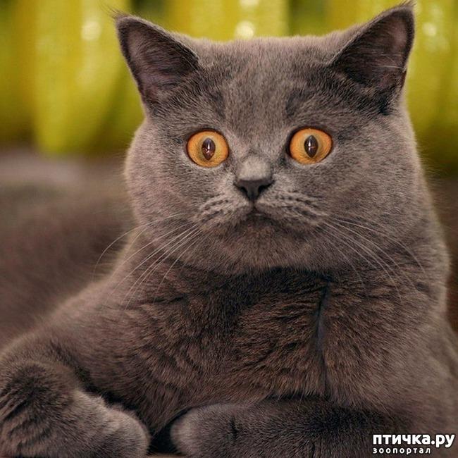 фото 4: Когда сказал коту, что это он у тебя живёт, а не ты у него