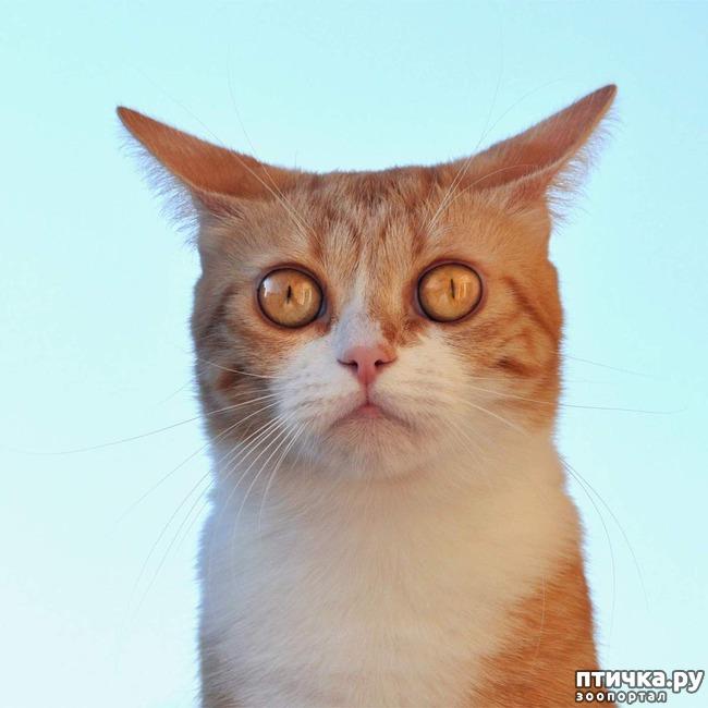 фото 5: Когда сказал коту, что это он у тебя живёт, а не ты у него