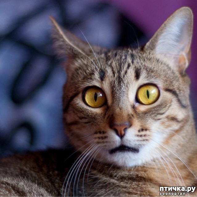 фото 6: Когда сказал коту, что это он у тебя живёт, а не ты у него