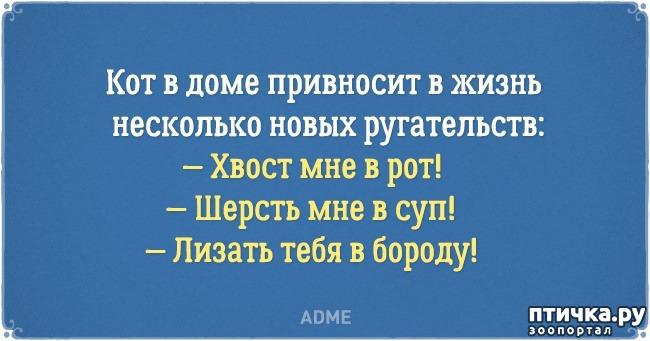 фото 3: Забавные открытки о нелегкой жизни с котом)))