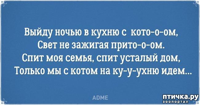 фото 7: Забавные открытки о нелегкой жизни с котом)))