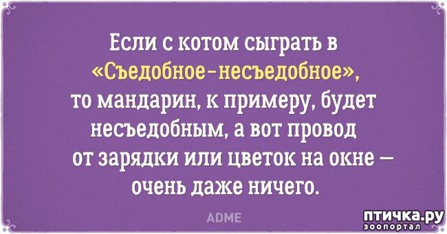 фото 9: Забавные открытки о нелегкой жизни с котом)))