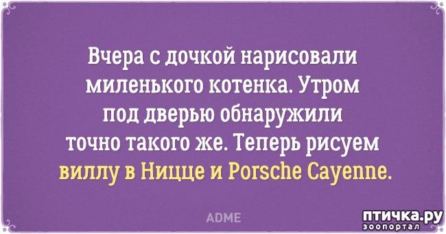 фото 11: Забавные открытки о нелегкой жизни с котом)))