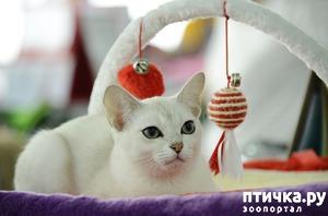 фото: Правильное питание - залог здоровья кошки