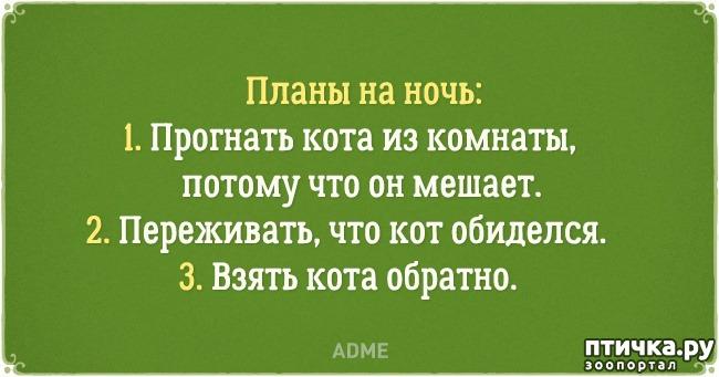 фото 13: Забавные открытки о нелегкой жизни с котом)))