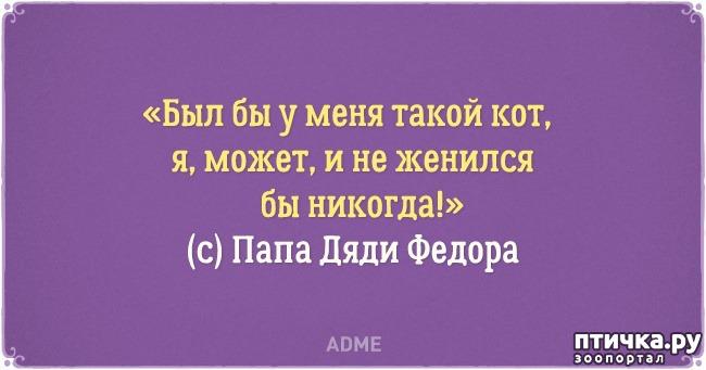 фото 15: Забавные открытки о нелегкой жизни с котом)))