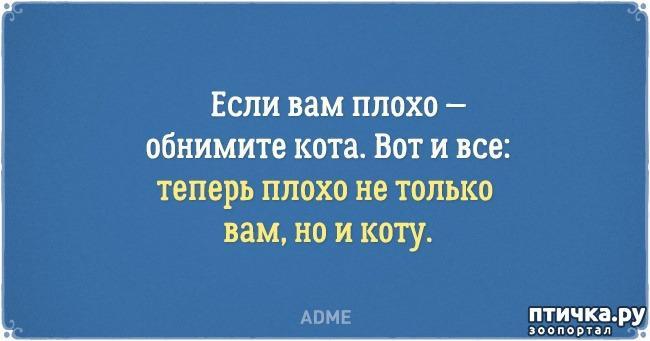 фото 17: Забавные открытки о нелегкой жизни с котом)))