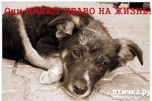 фото: О сути происходящего вокруг проблемы бездомных животных