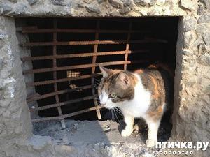 фото: Минстрой РФ защитит права кошек из подвалов многоквартирных домов