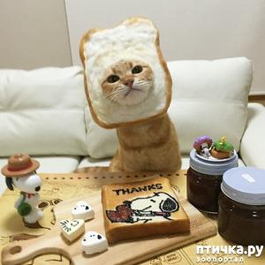 фото: Животные в самых нелепых и смешных костюмах =D
