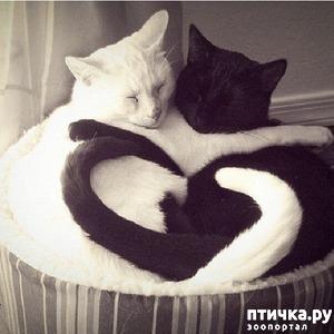 фото: Инь и Янь.