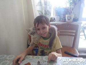 фото: Невские маскарадные и ребенок.