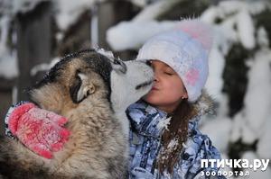 фото: МАЛАМУТ - это собака для Вас?