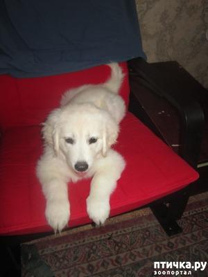 фото: Барыня в кресле и ее компания.