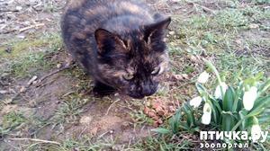 фото: Весенние кошки
