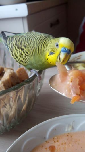 фото: Какой обед без Кеши?
