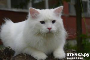 фото: Добро пожаловать в группу « Сибирские кошки ».