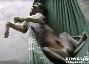фото: О собаке-лежебоке (приглашение к экспромту)