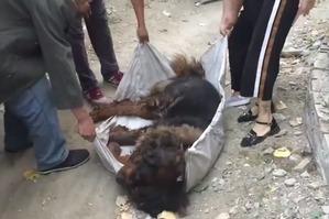фото: Спасатели не могли поверить в то, что спасают пса самой дорогой породы