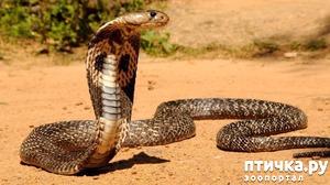 фото: Змея попросила помощи...
