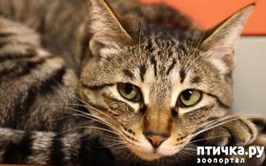 фото: История про кота Серегу и не только)))