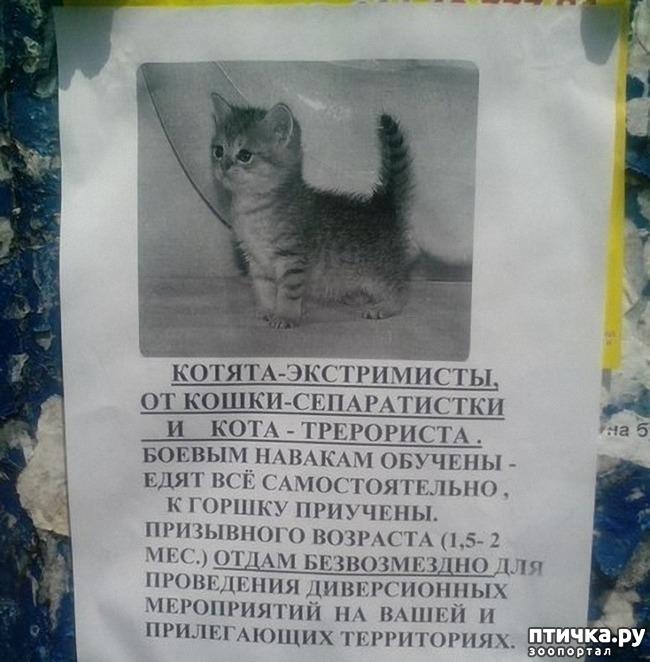 фото 10: Забавные объявления про животных)))