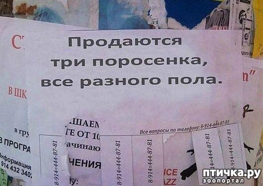 фото 18: Забавные объявления про животных)))