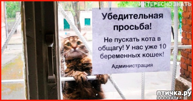 фото 21: Забавные объявления про животных)))