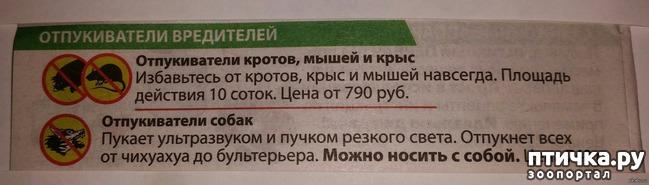 фото 22: Забавные объявления про животных)))