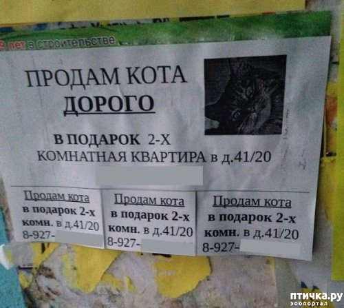 фото 23: Забавные объявления про животных)))