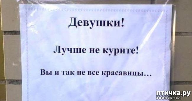 фото 28: Забавные объявления про животных)))