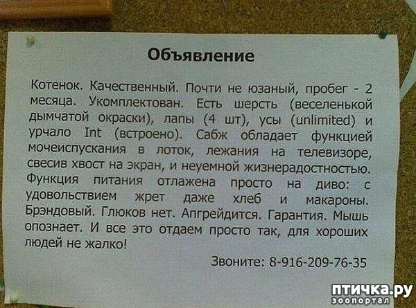 фото 24: Забавные объявления про животных)))
