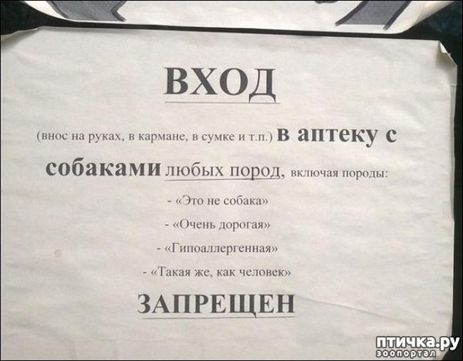 фото 25: Забавные объявления про животных)))