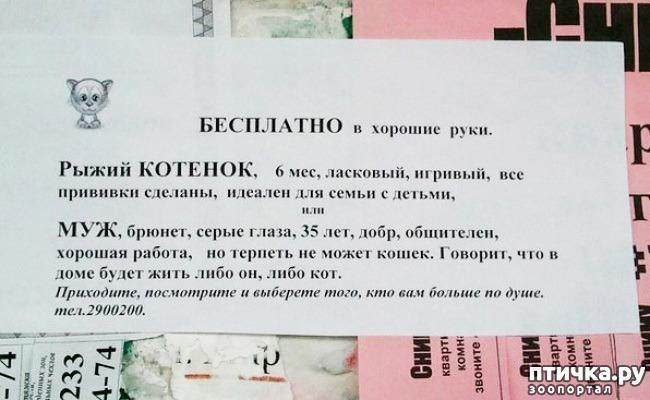 фото 26: Забавные объявления про животных)))