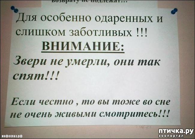фото 27: Забавные объявления про животных)))