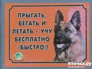 фото: Забавные объявления про животных)))