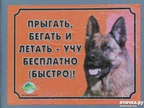 фото 1: Забавные объявления про животных)))