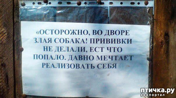 фото 2: Забавные объявления про животных)))